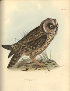1838_Zoology_F8.3_027